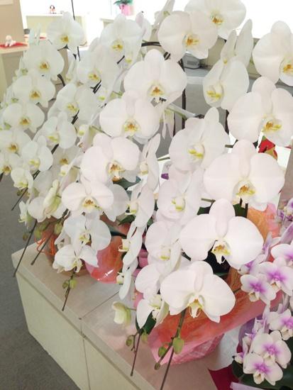 たくさんの花!