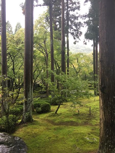 美しい苔と北山杉
