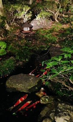 見事な庭の見事な鯉
