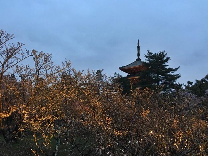 桜越しに見る五重塔